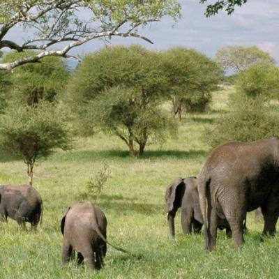 Travel Tips Thursday – Tanzania